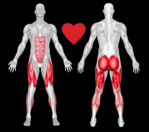 Мышцы участвующие в процессе катания на велосипеде